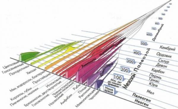 Схема развития жизни на земле